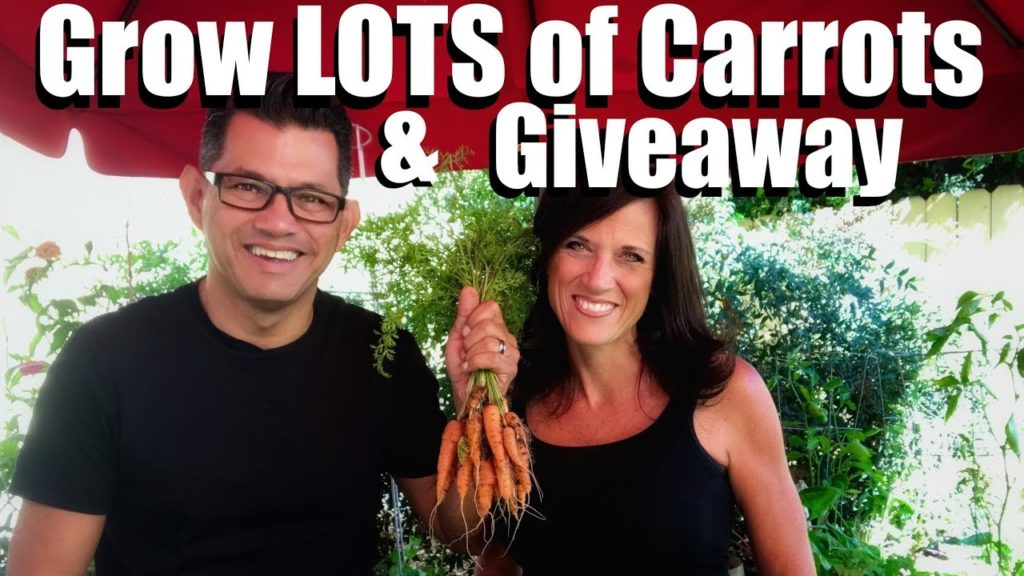 3 Tips to Grow LOTS of  Carrots & Giveaway // Fall Garden Series #5