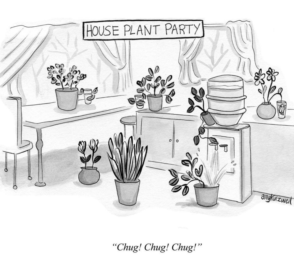This is what *really* happens to your plants when you're on vacation. Illustrati...