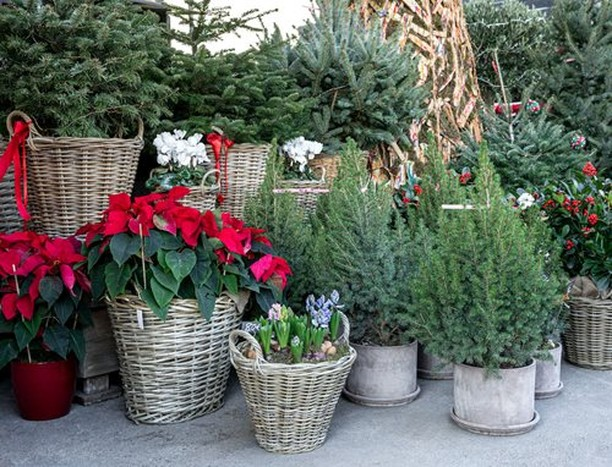Our December gardening checklists will be here soon! . Offering ideas, reminders...