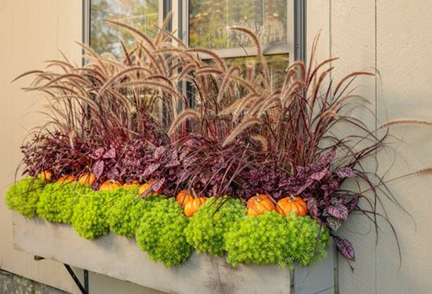 "In case it's still somewhat ""fall weather"" where you are, here's a planter idea ..."