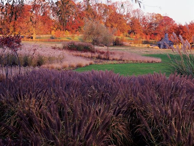 A rain garden is a shallow planted depression designed to hold water until it so...