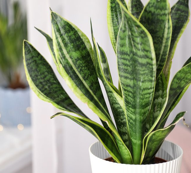 What was your first houseplant? . . If you're new to gardening indoors, or just ...