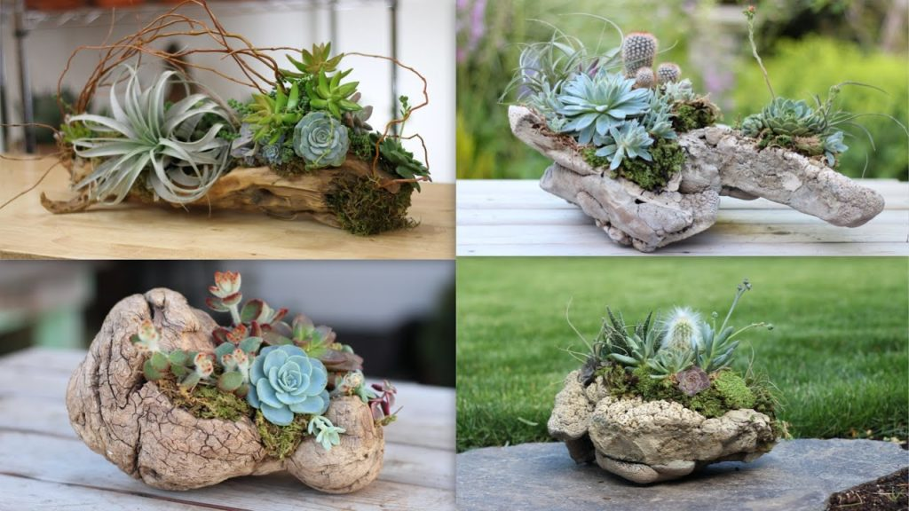 4 Ideas for Adhering Succulents to Driftwood and Rocks 🌿