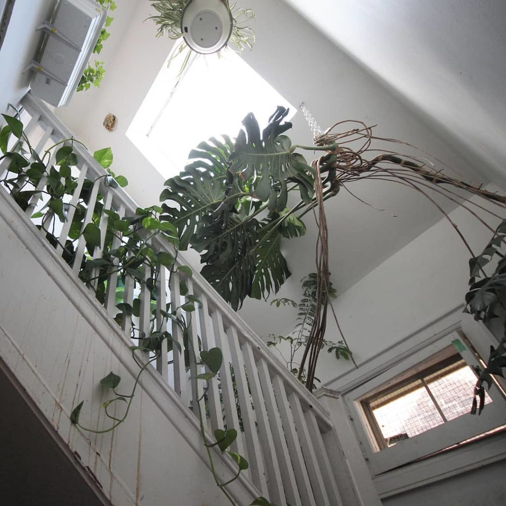 My friend's Monstera taking over an unused stairway. - Link in bio: doing the Cy...