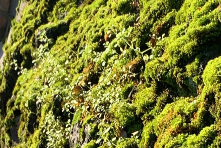 A little mossy world on a wall. I'm imagining tiny people (yes @knchappers & @th...