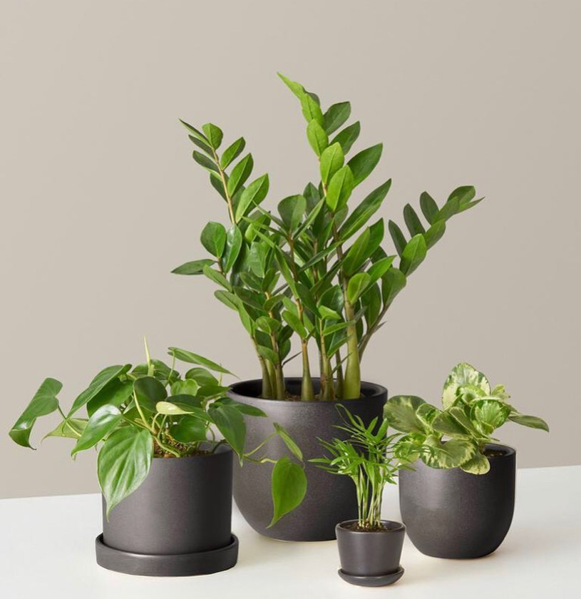 How to do #CyberMonday right: get yourself a plant bundle.  Whether you're givin...