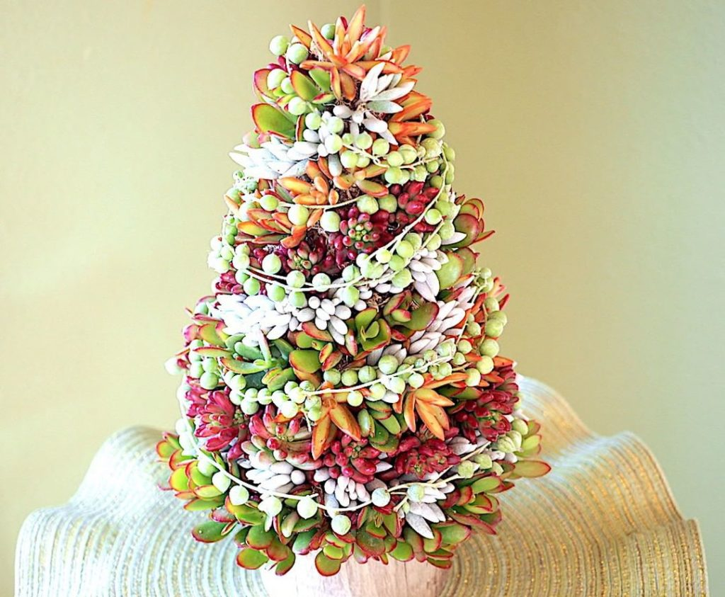 Talk about Merry and Bright! . Check out 3 succulent holiday projects from debra...
