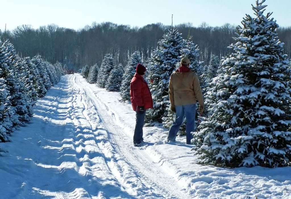 Are you picking out a Christmas tree this weekend? Here's some tips to keep in m...