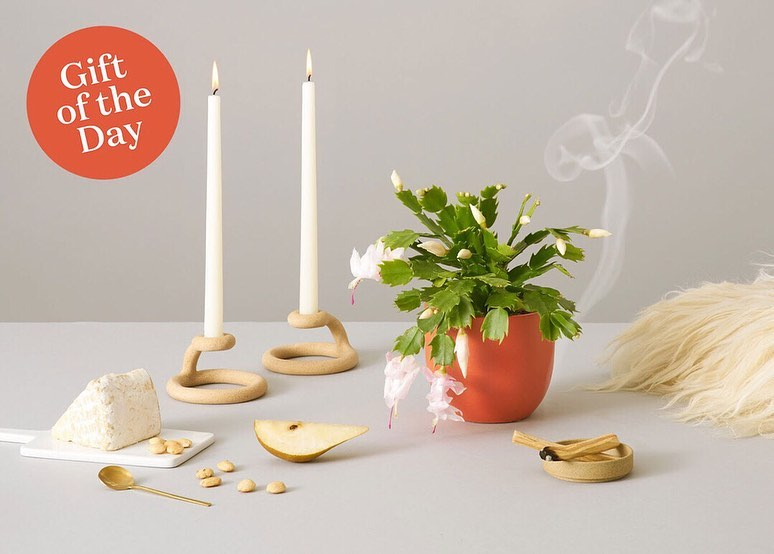 Our next #Sill12DaysofChristmas gift idea: a blooming gift for grandma. Our Zygo...