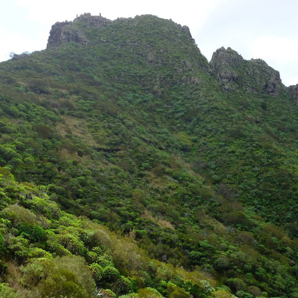 Extraordinary landscapes of N. Tenerife.  Brings a whole new palette of plant co...