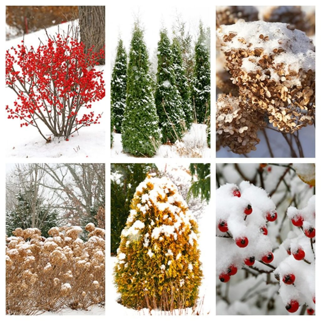 The end of 2019 is upon us. Have you taken a winter stroll through your garden t...