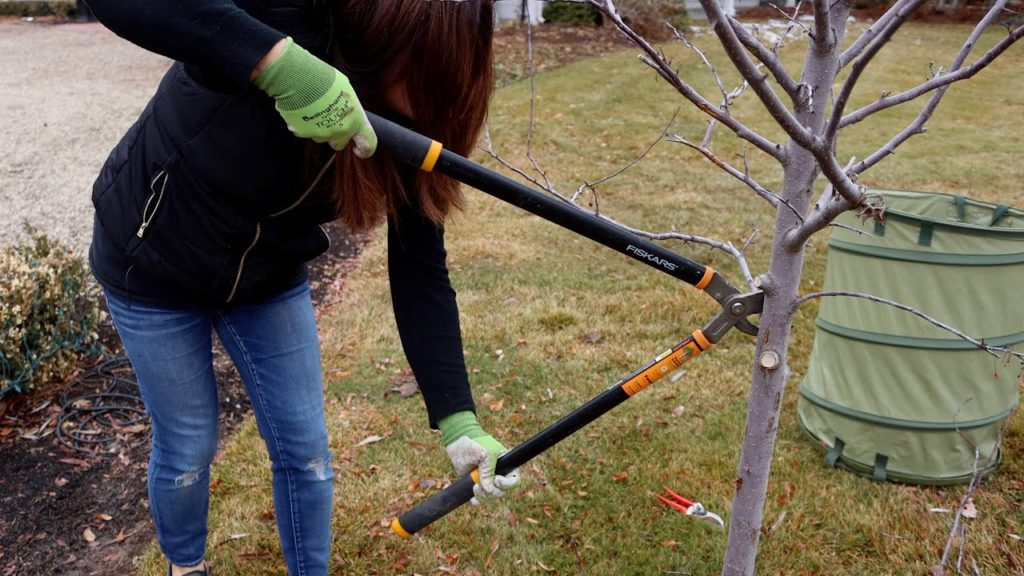 Pruning a Couple Trees In My Garden! 🌳✂️👩🌾// Garden Answer