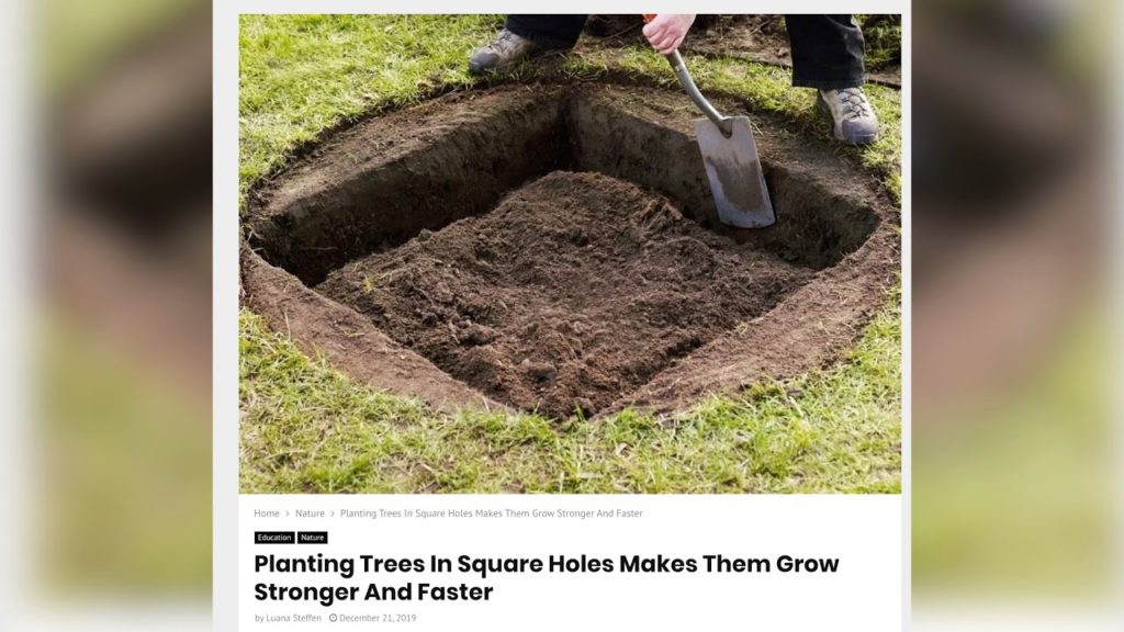 Planting Trees in Square Holes Makes Them Grow Stronger??? 🌲// Garden Answer