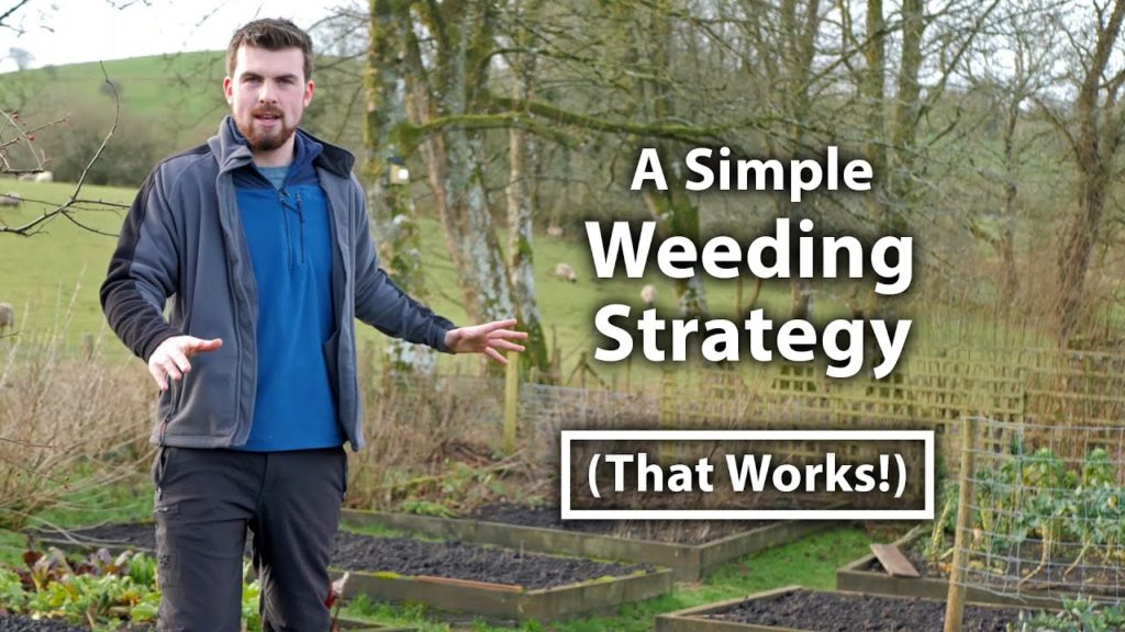 Why Your Garden is Full of Weeds (And How to BEST Control Them) | Grow Food For Free Series Ep1