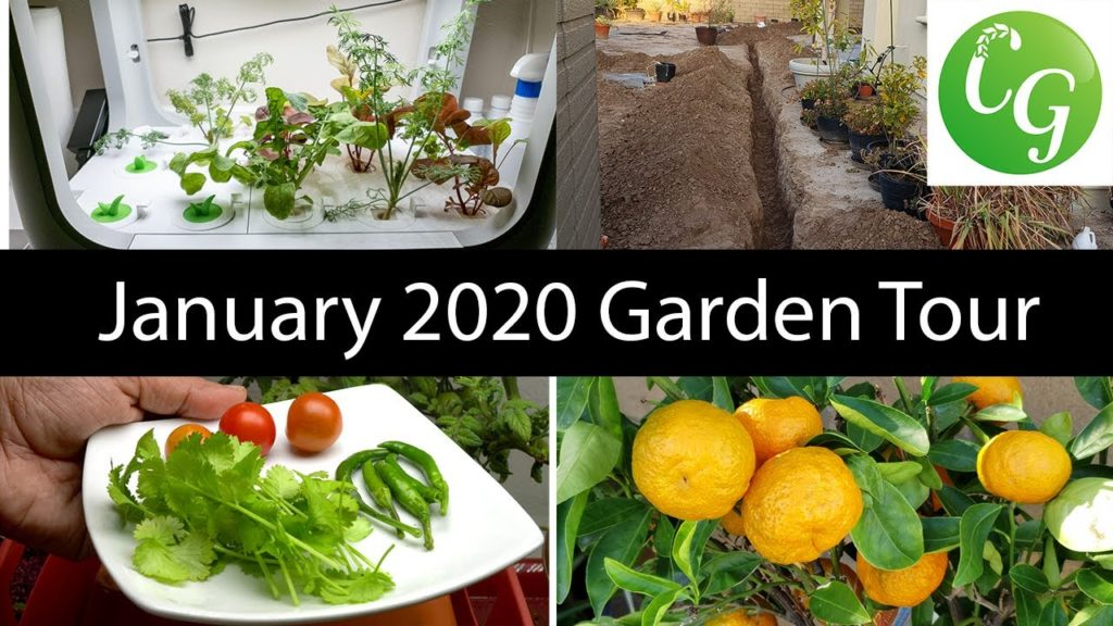 California Gardening - Jan 2020 Garden Tour - Gardening Tips!