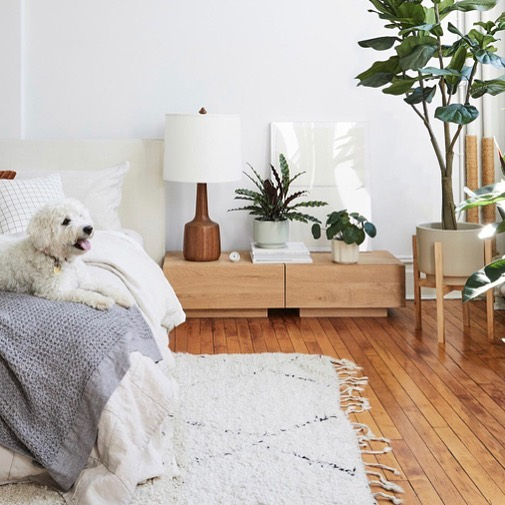 Houseplants have calming, relaxing effects, making them the perfect addition to ...