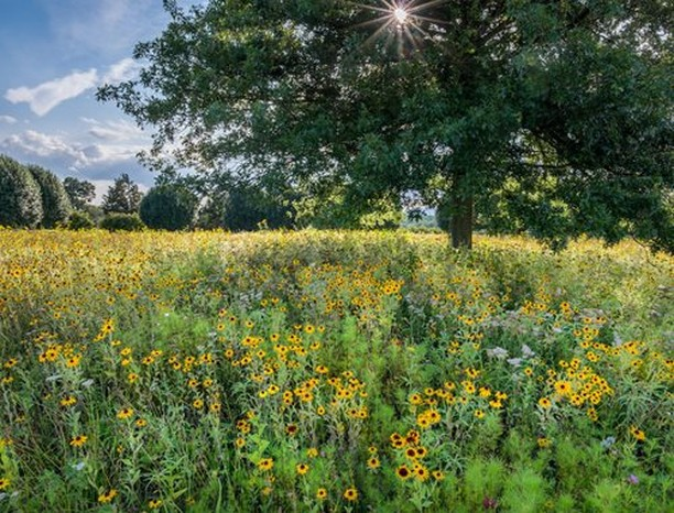What native plants do you have in your garden? . If you're not sure what plants ...