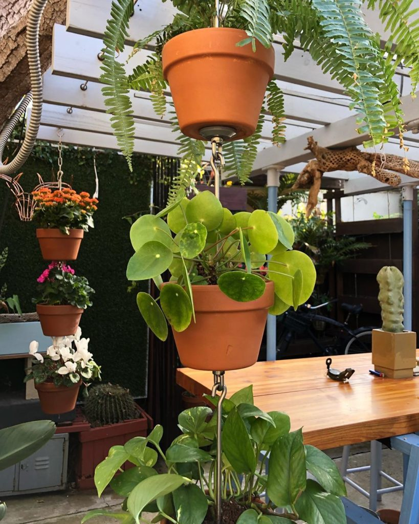How will you garden differently this spring? Try out SkyPots  An all-new way to ...