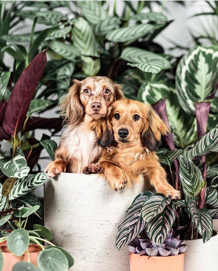Protectors of the plants doing what they do best  Photo of @buddythedappleddachs...