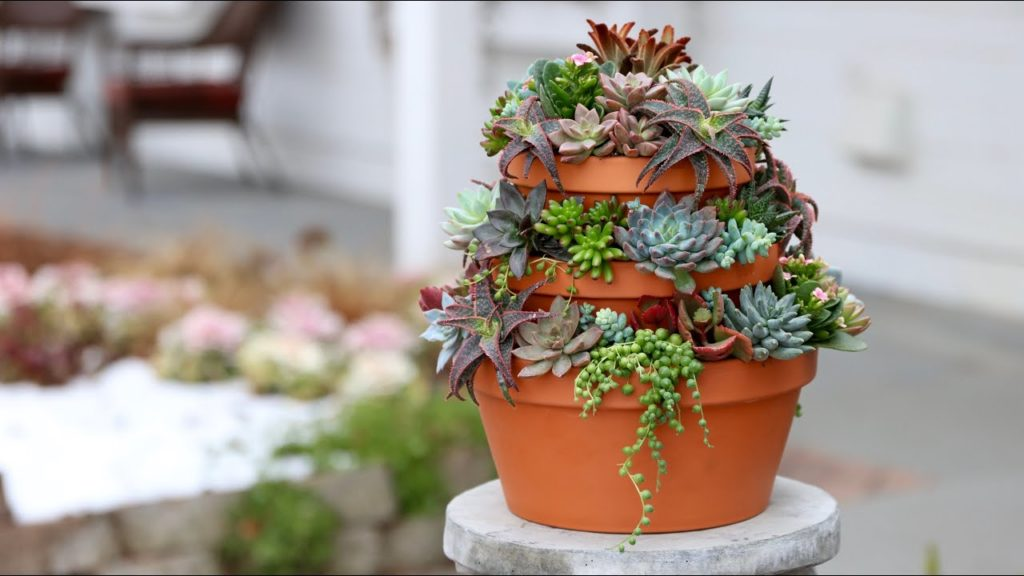 Succulent Tower 🌿// Garden Answer