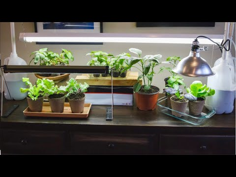 💡 LIVE: 3 Grow Light Mistakes to Avoid When Starting Seeds Indoors //Spring Garden Series  (REPLAY)