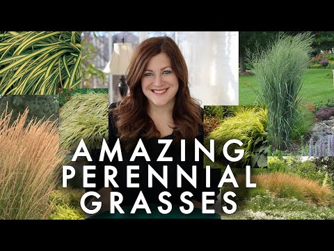 10 Perennial Grasses I Absolutely Love! 🌾💚// Garden Answer