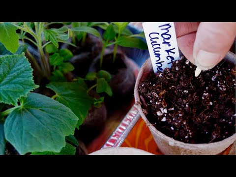 🍅LIVE: 3 Common Seed Starting Problems & How to Fix Them & LIVE Q & A (REPLAY)