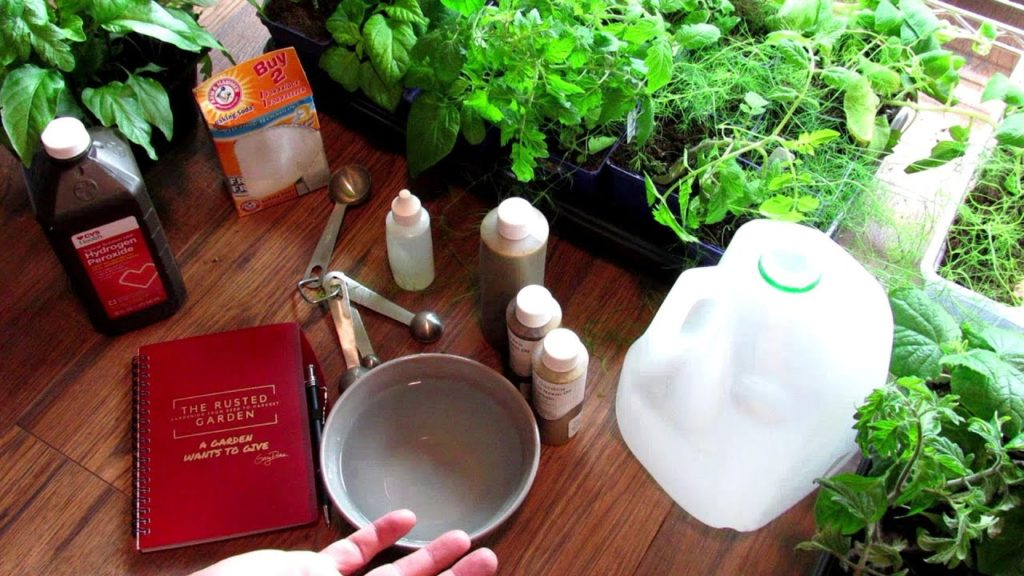 Using Garden Sprays 101: Neem Oil, Peppermint Oil, Baking Soda & Hydrogen Peroxide Sprays Explained!