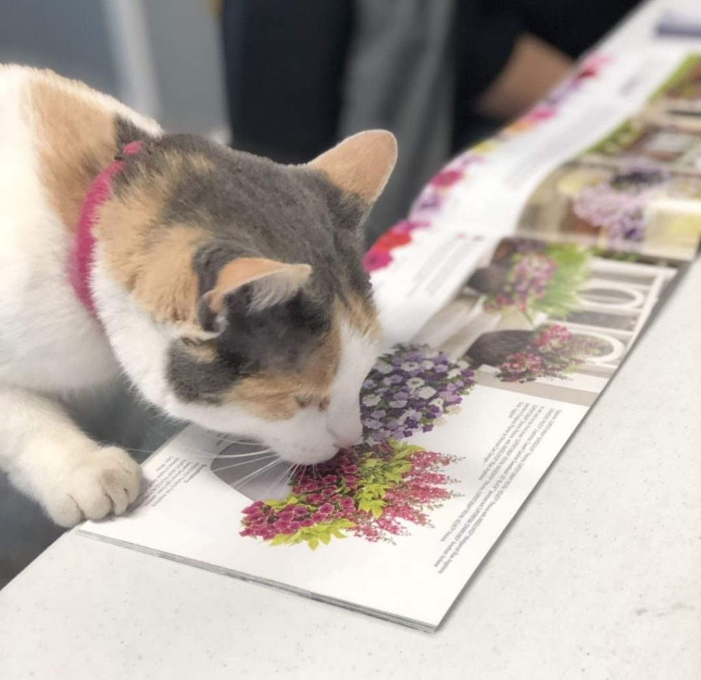 How are you spending your Caturday?? . This sweet kitty is helping pick out plan...
