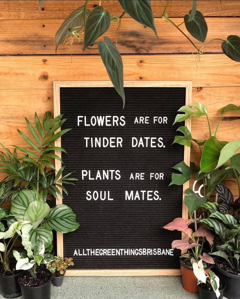 And by soulmates, I mean myself, because I'm giving ME all the plants.  Photo by...