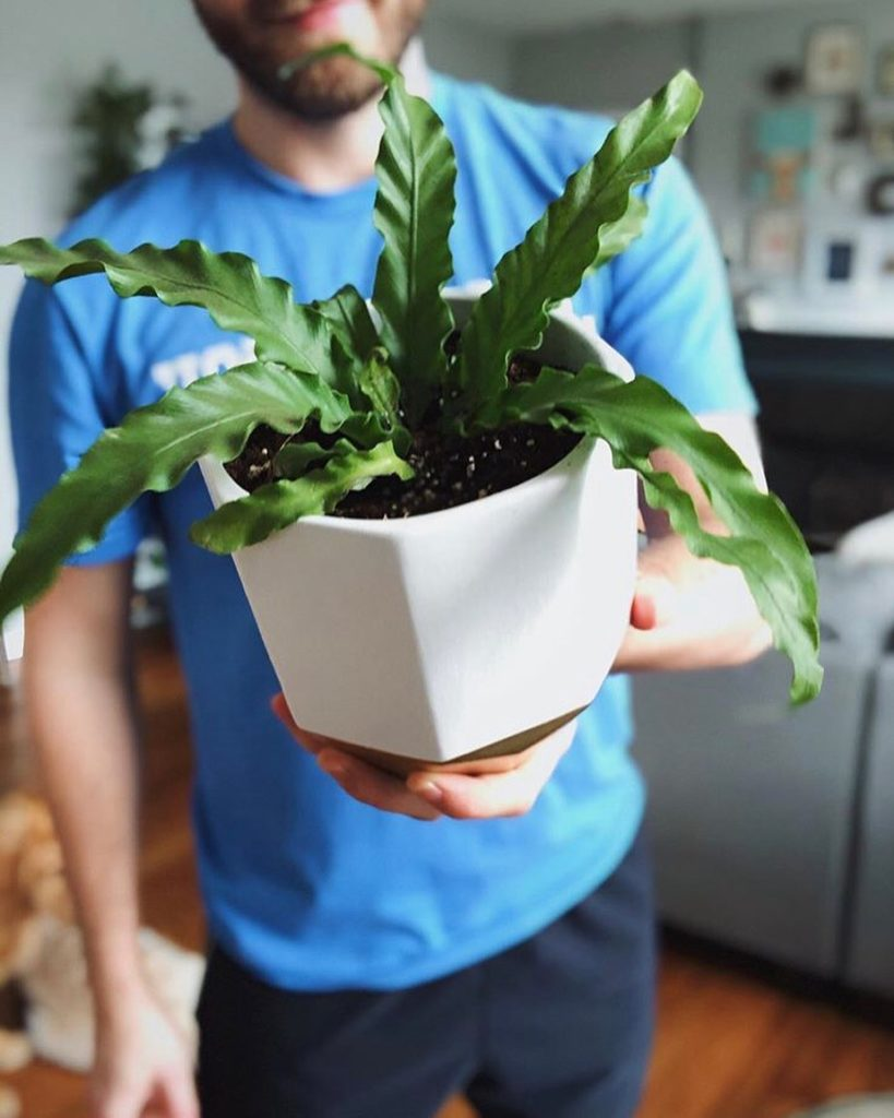 One of our favorites  Our Bird's Nest Fern is 30% off right now, for a limited t...