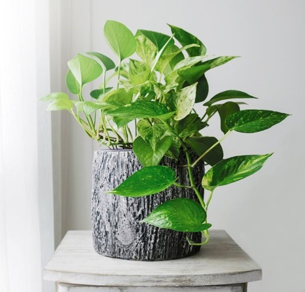 Monday Mystery Plant: This easy-care plant likes to be by the window but doesn't...