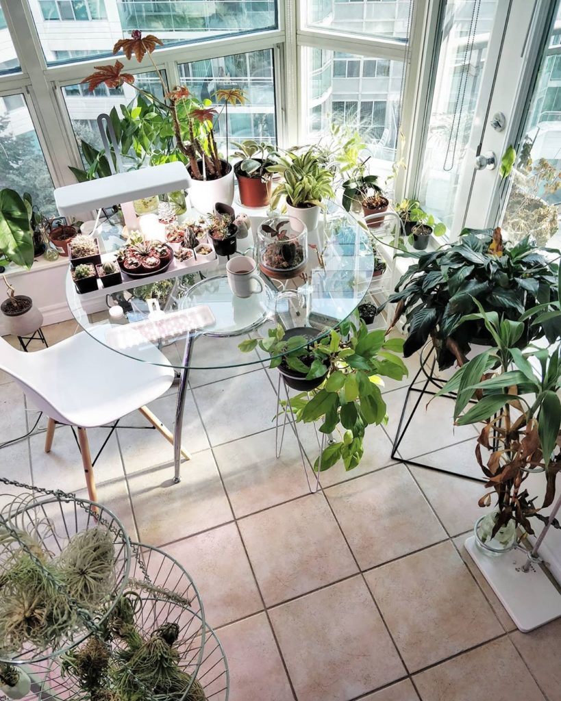 I'm thinking of getting a shelf to free up the space on the windowsill. It's a b...