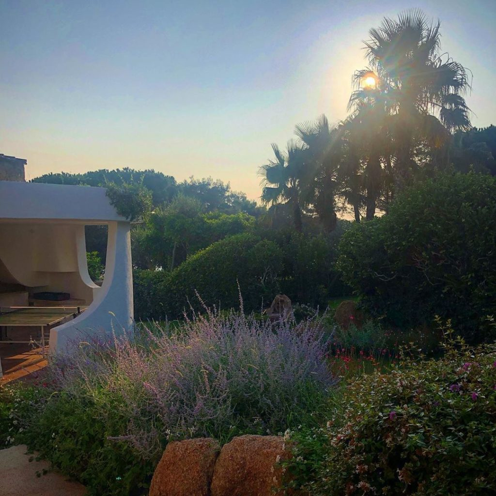 After two noisy stormy nights in London I'm dreaming of the garden in Sardinia I...