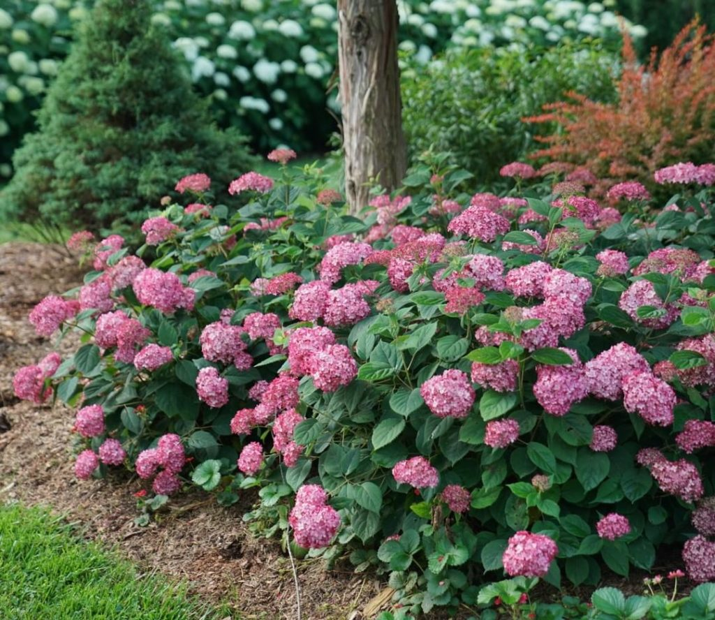 If you only want the best of the best plants, then make sure you have these 7 Pl...