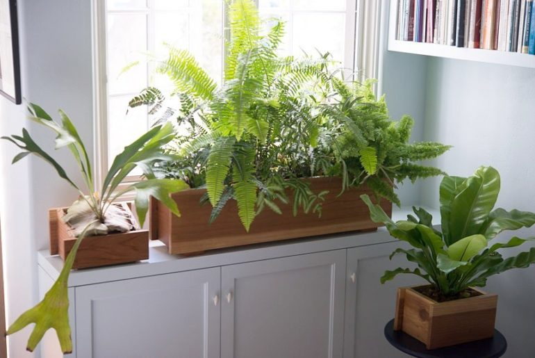Create a rain forest on your windowsill And who says you can't grow an elkhorn f...