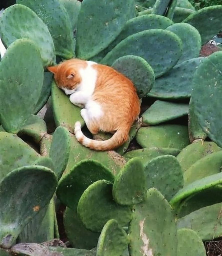 Caption this photo for a chance to win a box of free succulents. :@mundocactus...