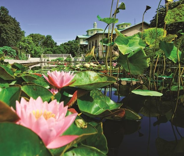 Name all the botanical gardens you've ever visited! . With so many amazing botan...