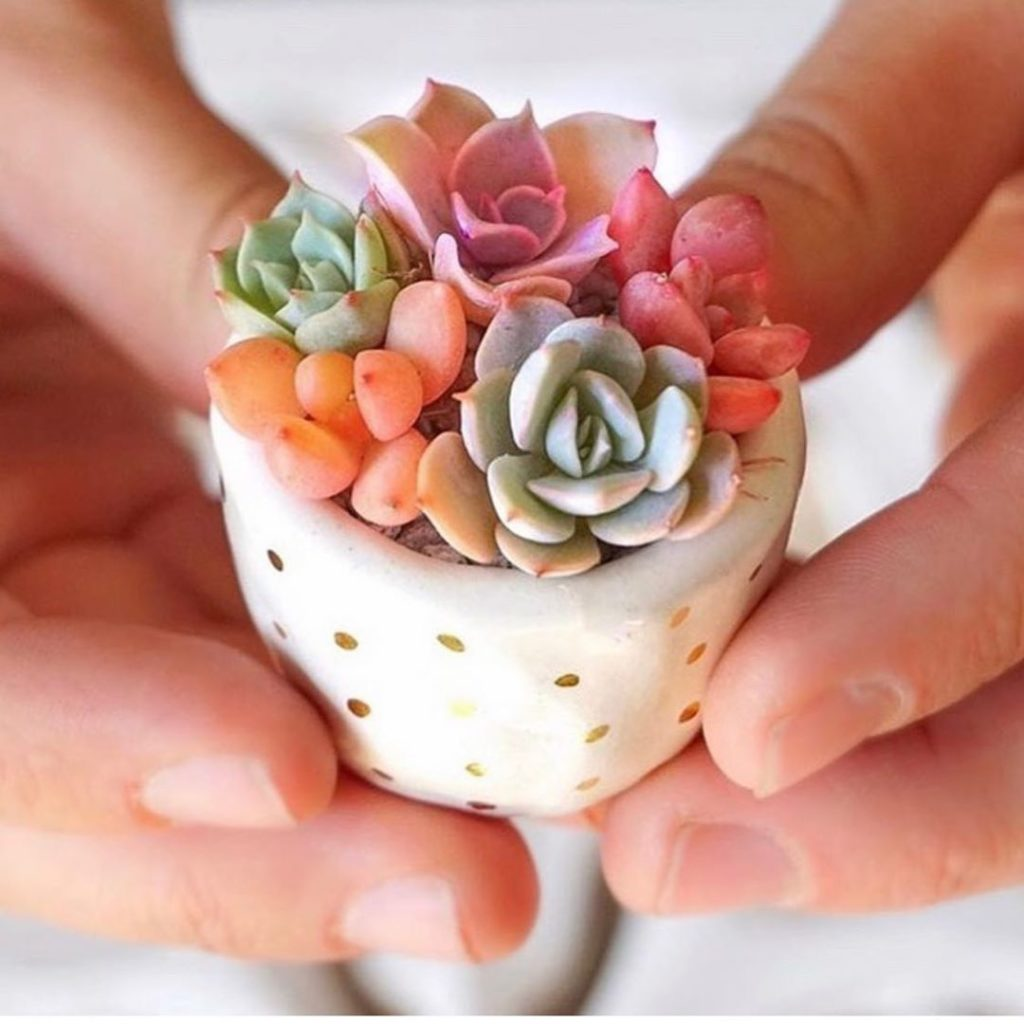>--> Dear significant other, pretty please order me succulents on Valentine's Da...