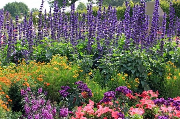 Is there something stopping you from having the flower garden of your dreams? . ...