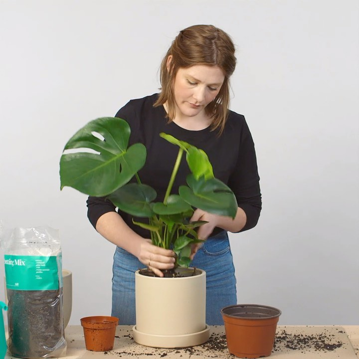 How to repot your plant, in 15 seconds.  Any other repotting quick tips? Drop th...