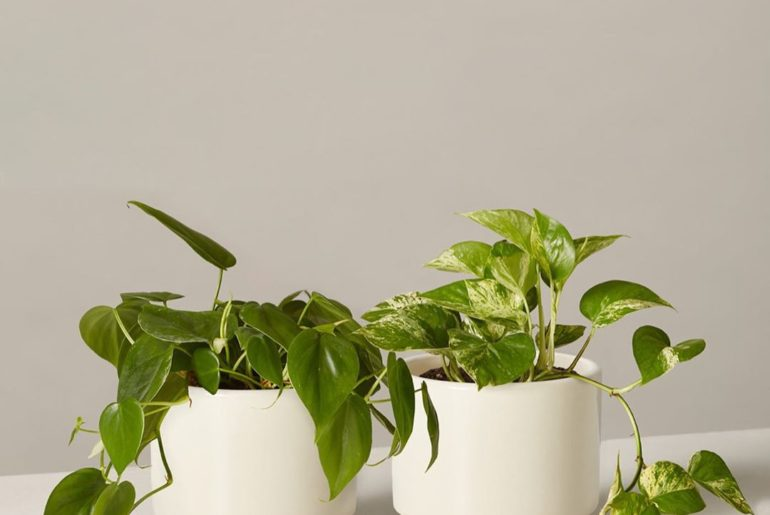Time to take the guesswork out of jump starting your own indoor jungle. We've cr...