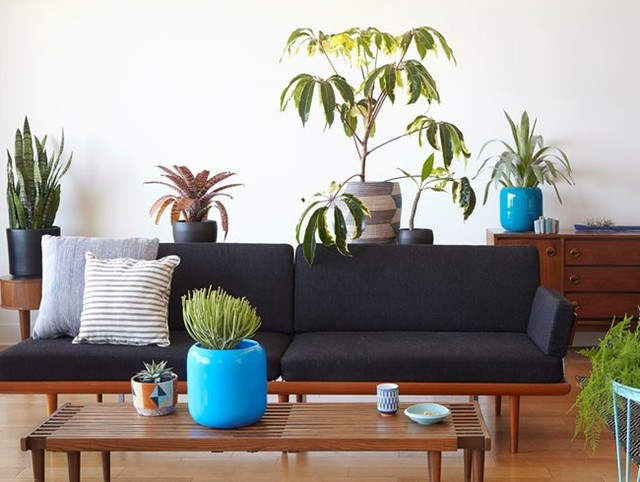 Do you talk to your houseplants? . This eclectic mix includes (clockwise from to...