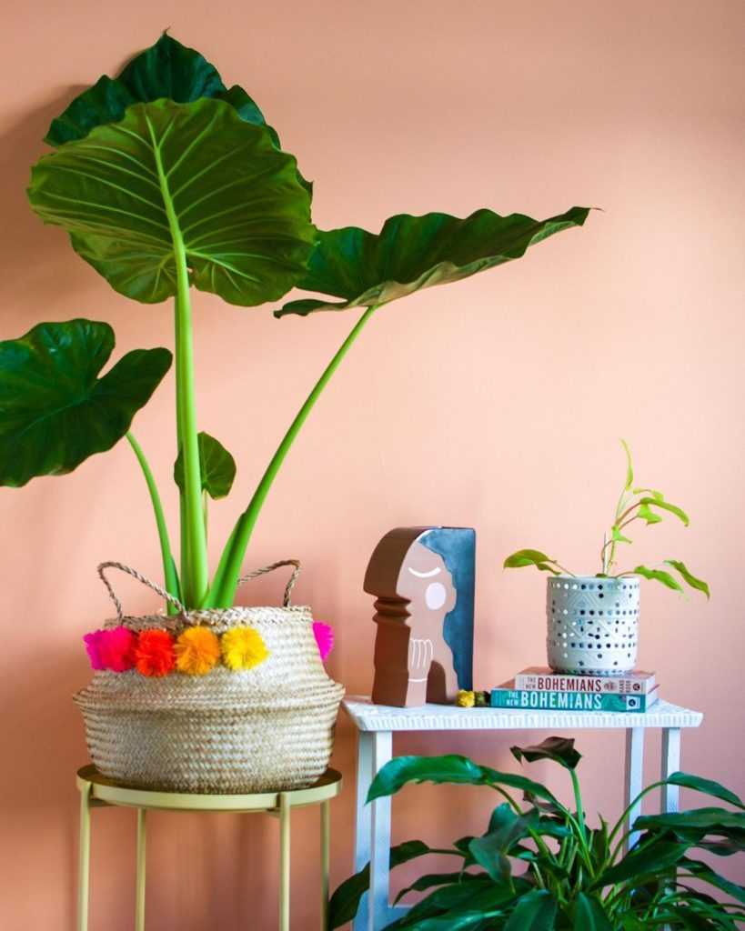 Our love for Elephant Ear plants is v real - how about you? Did you know the ter...