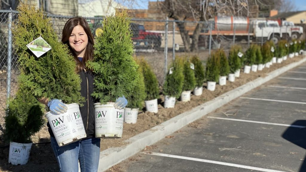 We Figured Out an Easier Way to Plant a Hedge of Arborvitaes! 💪🌲😃// Garden Answer