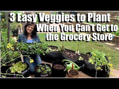 3 Quick & Easy Vegetables to Plant When You Can't Get to the Grocery Store 🥬🌱🥗