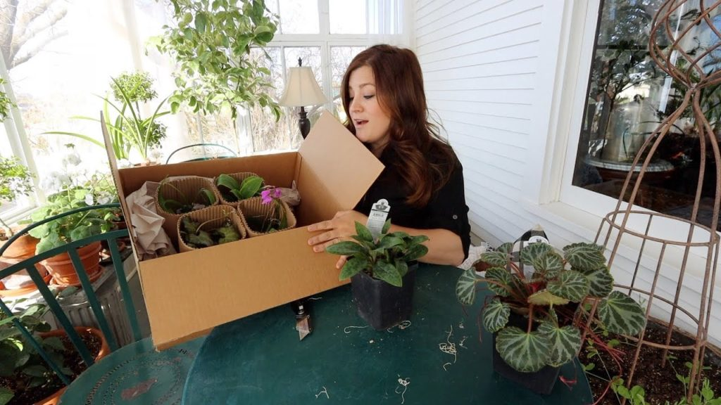 Plant Unboxing 🌿 // Garden Answer