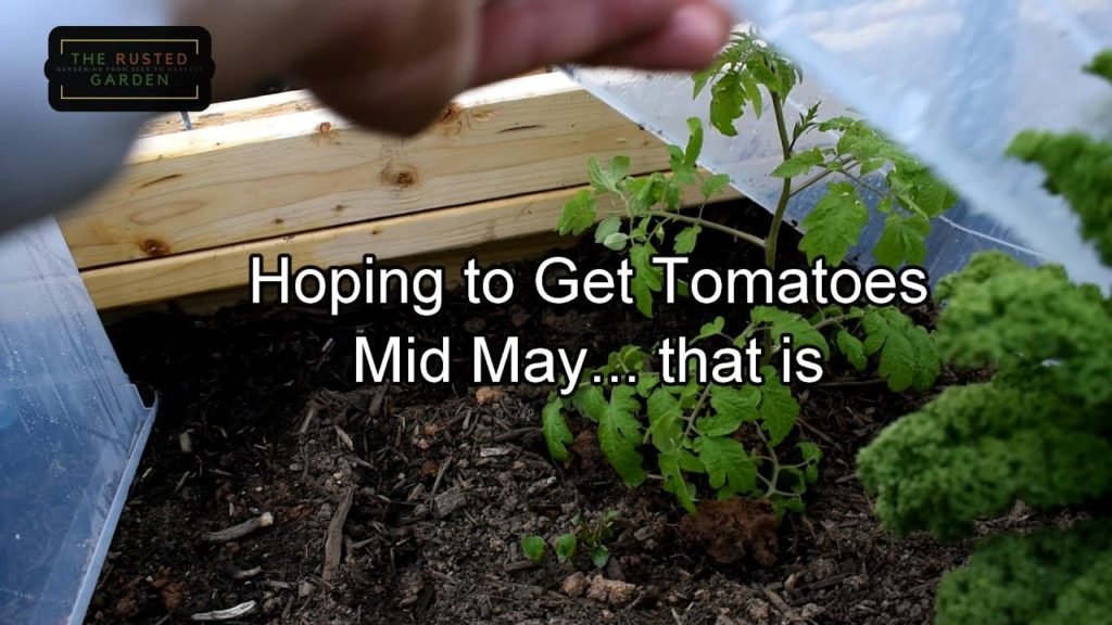 TRG Homestead VLOG E-13: Stay Safe!, Cold Crops & Tomatoes (Yep) Planted, Ax Throwing & New Builds