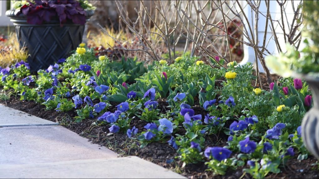 I Went Kind of Crazy With Pansies! 💙😆🤷♀️// Garden Answer