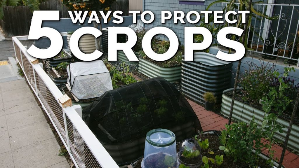 5 Simple Season Extension and Plant Protection Techniques